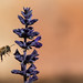 Bee Harvest