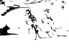 P3700516  la  corsa  !!! (gpaolini50) Tags: city blackandwhite bw photography cityscape milano photographic explore vision e photoaday bianconero emotive biancoenero citt emozioni dinamismo explora velocita ciclisti photographis explored esplora dinamicita phothograpia