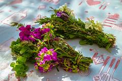 (Psinthos.Net) Tags: flowers light shadow spring blossoms april oregano sunnyday  herbals   psinthos