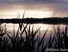 _JAM0777-2 (jamphoto53) Tags: nature silhouette d750 roseaux tang vgtation feuillage gudeselle