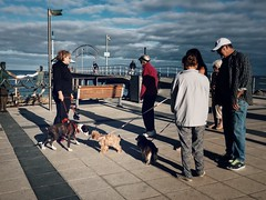 Meet & Greet (Brighton Jetty) (michellerobinson.photography) Tags: life friends people colour dogs seaside moments streetphotography documentary lifestyle streetlife scene smartphone mansbestfriend dailylife brightonbeach narrative morningsky walkingdogs morningwalks michellerobinson brightonjetty iphoneography 4tografie brightonsouthaustralia procameraapp vscocam michmutters iphone6plus everydayaustralia
