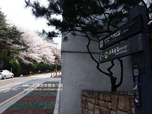 안산공원벚꽃01