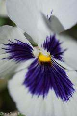 _IMG6772 (Evans,Christian) Tags: flowers macro garden nc pentax raleigh azalea wral k3 hdda35mm