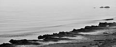Sculpted Shoreline (B2 Photography) Tags: bw lake beach water up fog michigan shoreline peaceful lakemichigan boulders shore algae placid