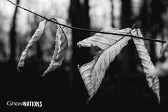 Some Deaths Linger Longer Than What They Should (Ghost Of Nations Photography And Digital Art) Tags: trees leaves forest dark dead death leaf woods gloomy decay gothic disturbing neogothic liminal disquiet newgothic ghostofnations ghostofnationsphotography