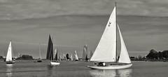 Maldon, Essex (Andy Gant) Tags: uk england blackandwhite bw water river boats sailing riverside sails essex bwphotography maldon riverblackwater bweffect maldonprom bwimages maldonregatta bwimagesfromaroundtheworld