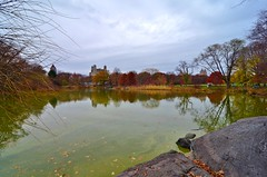 Central Park-Turtle Pond, 11.28.15 (gigi_nyc) Tags: nyc newyorkcity autumn centralpark fallfoliage turtlepond