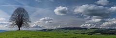 Spring Coming (manuelchopard) Tags: blue color tree green nature clouds landscape switzerland countryside spring minolta sony thun rokkor minoltamd5014 retrolens sonya7