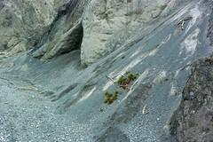Rheinschlucht_2 (torremundo) Tags: schweiz steine fluss rhein graubnden vorderrhein