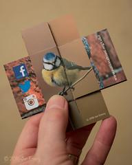075/116 Tickled Pink (Jamarem) Tags: bird derbyshire card bluetit everlasting calkeabbey tickledpink canoneos70d 116picturesin2016