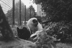 (katharsiv) Tags: blackandwhite bw cats nature monochrome beauty animal analog sadness nikon bn lovely lightness frail granulado granulated