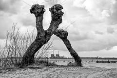 Nuclear (Hkan Dahlstrm) Tags: sea bw tree beach photography se skne sweden f56 uncropped resund bjrred 2016 barsebck skneln xe2 sek xc50230mmf4567ois parkalln15 1025042016184337redigera