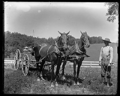 Victorian photograph of a a man with two horses in Fallston, Maryland. (Remsberg Photos) Tags: horses blackandwhite usa field vintage fence wagon team antique farm horizon working maryland historic hauling scanned overalls worker cart jugs glassplate fallston harfordmd