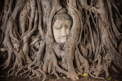 Thailand - Wat Phra Mahathat - The Buddha in the tree (Cyrielle Beaubois) Tags: tree statue stone thailand ancient ruins asia head roots thaïlande bouddha asie southeast ayutthaya 2015 watphramahathat canonef70200mmf40lusm canoneos5dmarkii cyriellebeaubois