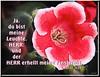 Licht in der Finsternis / Light in darkness (Martin Volpert) Tags: flower fleur licht darkness god outdoor faith jesus flor blossoms kirche blumen bible christianity gesneriaceae sinningia fiore bibel christus gemeinde biblia leuchte dunkelheit gott glaube bijbel ecclesia glauben christentum finsternis bibelvers giesen תנך erhellen bibelverskarte gloxinie mavo43 speziosa