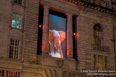 """Elephantastic"" - Lumiere London"