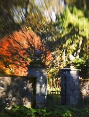 Autumn explosion! (Elisafox22 Busy this coming week!) Tags: trees sunshine stone gardens lensbaby scotland colours aberdeenshire sony textures telephoto f28 gatepost optic kennethmont leithhall gateposts doubleglassoptics nex6 composerpro telephotooptic elisafox22 elisaliddell2016