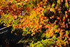 20151219-DSC_4730.jpg (d3_plus) Tags: street autumn autumnfoliage sky fall nature japan nikon scenery shrine kamakura daily autumnleaves 日本 streetphoto 28105mmf3545d 紅葉 nikkor 秋 自然 神社 寺 空 dailyphoto touring 風景 thesedays 鎌倉 神奈川 28105 景色 28105mm 日常 路上 holyplace ツーリング 古都 zoomlense 広角 ancientcapital ストリート ニコン ズーム 聖地 28105mmf3545 d700 281053545 kanagawapref nikond700 aiafzoomnikkor28105mmf3545d 路上写真 28105mmf3545af aiafnikkor28105mmf3545d
