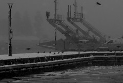 (blazedelacroix) Tags: ferry crows vaxholm blazedelacroix