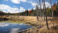 Autumn Beaver Pond (Knarr Gallery) Tags: autumn trees sky ontario canada color colour fall leaves clouds nikon wetlands marsh d300 beaverpond