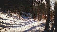 Snow path (lady_saneth) Tags: trees sun snow nature beautiful forest town path