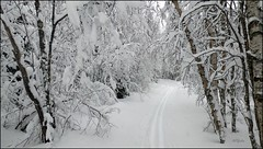 I went skiing today (HJsfoto) Tags: trees winter snow nature forest landscape svast northofsweden almostanything landscapesdreams myfavouriteforest