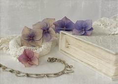 still sunday again (✿ *•.。.☆•CAH•☆.。.• * ✿) Tags: flowers stilllife texture vintage pastel whitebackground romantic softlight softcolours pastelcolours
