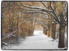 natürlicher Tunnel (1elf12) Tags: schnee trees winter snow germany deutschland tunnel bäume braunschweig oker stöckheim mpf