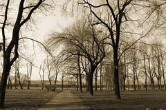 Parco Teramo - Milano (lamari20061) Tags: park trees winter italy parco milan nature alberi italia peace milano natura pace inverno seppia teramo barona
