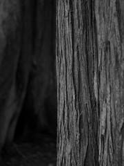 Wood Textures (Paul T. Marsh/PositivePaul) Tags: leica tree monochrome blackwhite dof bokeh olympia nikkor manualfocus oly 2016 nikonlens manualexposure leicadigital leicadigilux3 leicad3 wwwpaulmphotographycom paulmarshphotography lightroom5 paultmarsh paulswoods
