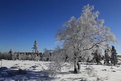 Winter Wonderland (EXPLORED 2016/01/31) (winkler.roger) Tags: winter snow germany landscape blackforest winterlandscape freudenstadt schwarzwaldhochstrasse kniebis