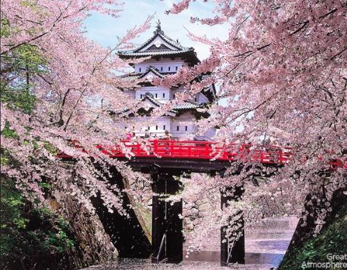 Khuyến mại tour Nhật mùa hoa anh đào