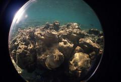 Fish (Alveart) Tags: pacific panama pacifico centroamerica centralamericaoceansnorkelinglomofisheyelomographyunderthewater