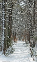 A beautiful day for a walk... (Janeinmaine1) Tags: trees snow path maine winterinmaine