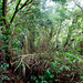 Tropical Forest (Morne Trois Pitons National Park, Dominica)