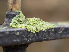 Railing moss (James E. Petts) Tags: macro london moss centralpark railings eastham