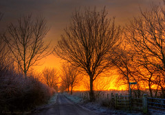 January Dawn at Ellie's Gate (Ninja Dog - 忍者犬) Tags: 2016 january winter geddington newton northamptonshire eastmidlands midlands england english uk nikon d7200 hdr tonemapped landscape scenery countryside grangeroad countrylane nature natural rural trees hedgerow fence frost frosty dawn sunrise earlymorning colour gold red gateway gate tranquil peaceful contrejour backlighting serene sycamore