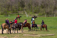DSCF0318.jpg (Ed Traywick) Tags: horses horse leo robyn obstacles horseclinic
