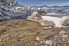 Estuary (Dan Abbett NV) Tags: laketahoe whalebeach danabbett
