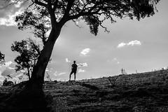 _MG_9165 (jayjay1317) Tags: blackandwhite tree canon landscape 24mm canon24105mmf4 canon650d