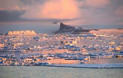 pink sunrise  - weddell sea, antarctica (Russell Scott Images) Tags: pink snow ice sunrise antarctica mauve brash weddellsea