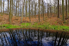Wood reflection (Zygonyx) Tags: pentax peugeot 3008 bivre k20d dxo10 hd1685mm