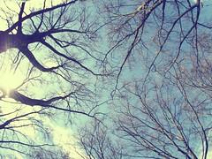 Heaven (Markus Rdder (ZoomLab)) Tags: street wood cloud fish heaven olympus fisheye ste baum mnster omd zoomlab olympusomd blutbahn fotodinge