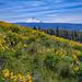 Mt.+Hood+and+wildflowers+seen+along+the+Tom+McCall+Preserve+hike%2C+Oregon