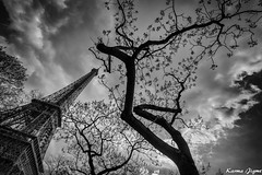 Higher and higher (karmajigme) Tags: travel trees blackandwhite paris france monument monochrome nikon noiretblanc eiffeltower shapes toureiffel