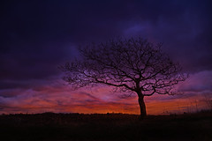 Lower your eyelids to die with the sun (mortimerphotographic) Tags: sunset tree wales photoshop canon landscape photography artistic explore caerphilly 5dmk2