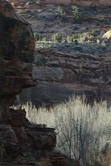 Lightways (Kendall Helmstetter Gelner) Tags: trees light canyon sidelight