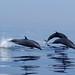 Turismo de Avistamiento de Cetáceos, una Oportunidad para Guatemala