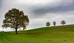 3 et 1 (alain.winterberger) Tags: nature schweiz switzerland nikon suisse vert arbres nuages paysage arbre printemps champ romandie svizerra bfv200 grosdevaud goumoens goumons nikonpassion