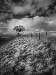 Fanning (Dylan Nardini) Tags: sky tree grass fence ir scotland nikon railway infrared lanarkshire d80
